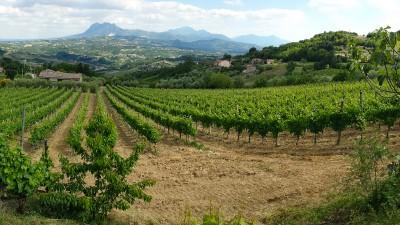Thumbnail Culinary and wine experience at Feudo di Castelmozzo