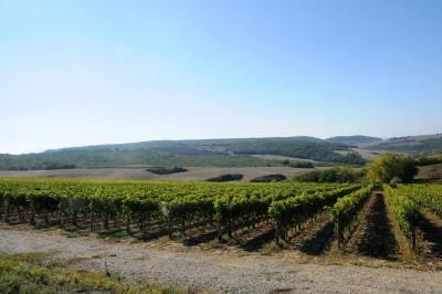 Thumbnail Wine Tour at Ercolani Montepulciano winery