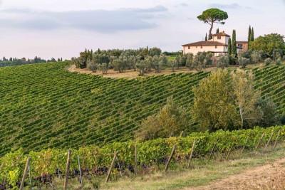 Thumbnail Terroir Experience presso Villa le Corti