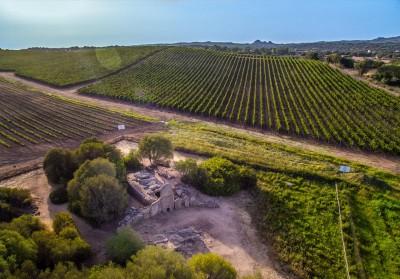 Thumbnail Vermentino Experience at Capichera Winery