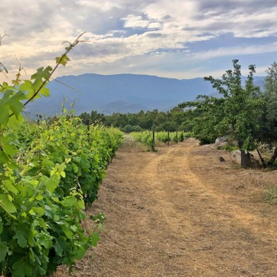 Thumbnail Wine Tasting Experience at Colline del Vento winery