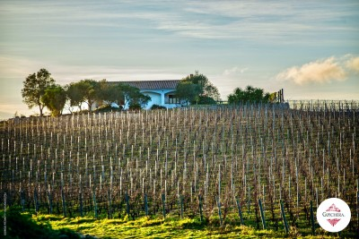 Thumbnail Superior Wine Tasting at Capichera