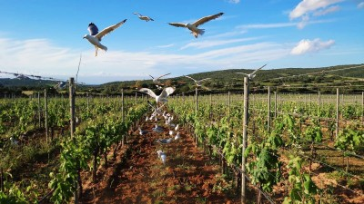 Thumbnail Premium Wine Experience at Capichera