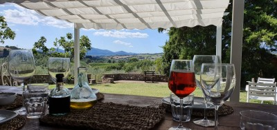 Thumbnail The enchantment of the vineyards and olive groves of Maremma: Poggio al Gello
