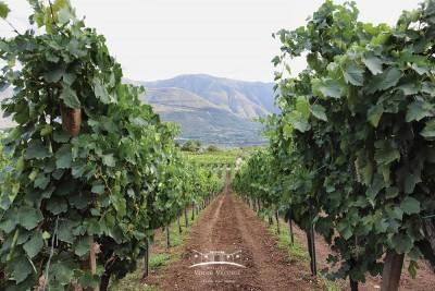 Thumbnail Classic Wine Tour at Masseria Vigne Vecchie