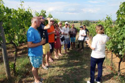 Thumbnail Organic Wine Tour at Poggio Al Casone