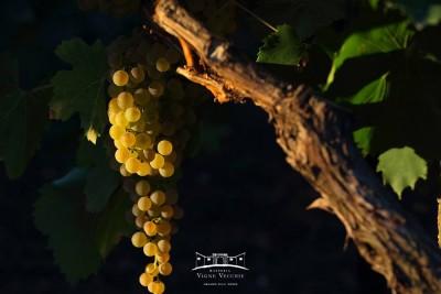 Thumbnail Golden Wine Tasting at Masseria Vigne Vecchie