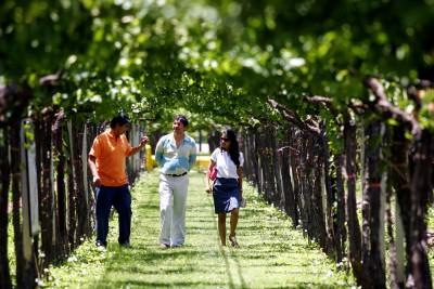 Thumbnail Wine tour privato di mezza giornata da Mendoza