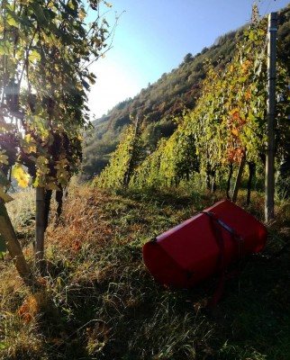 Thumbnail Excellence of Valtellina at Caven Camuna