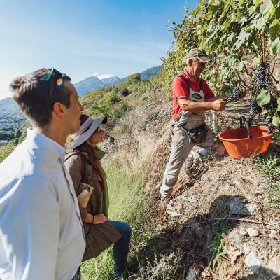Thumbnail Heroic Vineyards Tour at Caven Camuna