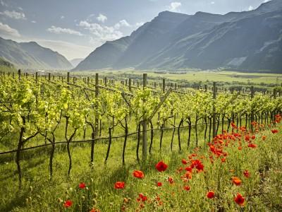 Thumbnail Wine Experience at La Cadalora winery