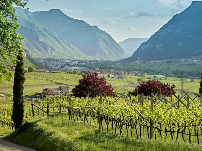 Thumbnail Walk to the Sanctuary of San Valentino from La Cadalora Winery