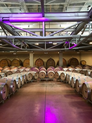 Thumbnail Icario top rated wines Experience