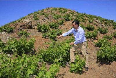 Thumbnail Wine Tour: visita alla cantina Axarquía