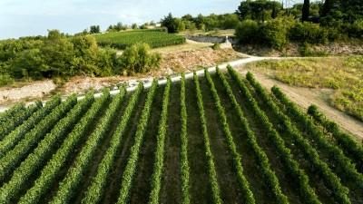 Thumbnail Tour of the La Fabriseria Vineyard