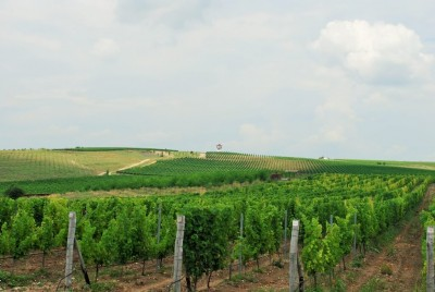 Thumbnail Your Bulgarian Wine and food adventure