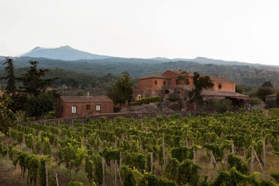 Thumbnail Wine brunch experience at Scilio wines