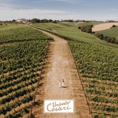 Thumbnail Walk in the vineyard at Umberto Cesari