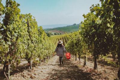 Thumbnail Wine tasting plus experience at Oddone Prati