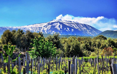 Thumbnail Among ancient vines and lava flows on Etna's slopes