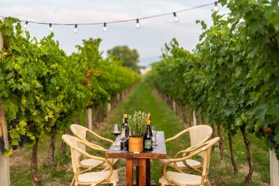 Thumbnail Discovering Umbrian wines at La Fonte di Bevagna