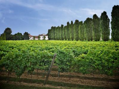 Thumbnail Trilogy wine tasting experience at Casa Paladin