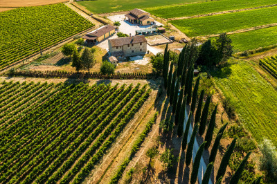 Thumbnail Discover Umbrian wines at Fonte di Bevagna