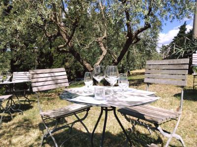 Thumbnail Tour and tasting at Castello di Montegiove