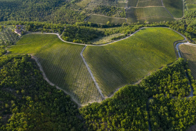 Thumbnail Degustazione panoramica da Rocca di Castagnoli