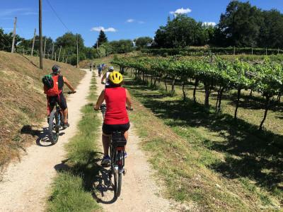 Thumbnail Tour in bici a Colà di Lazise con degustazione vini presso Bergamini