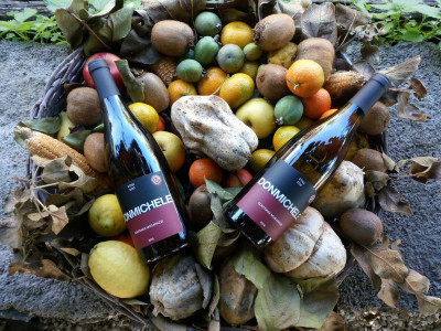 Thumbnail Picnic in the Vineyard at Tenute Moganazzi