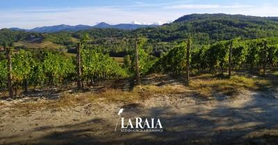 Thumbnail Wine Tour and tasting at Tenuta La Raia