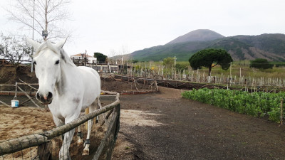Thumbnail Horse riding and wine tasting with lunch at Lune del Vesuvio