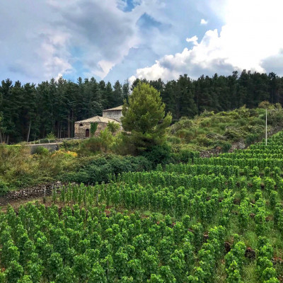 Thumbnail Wine Experience and overnight stay in a Country House