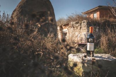 Thumbnail Wine Experience: In Malleolus Veritas presso la Cantina Emilio Moro
