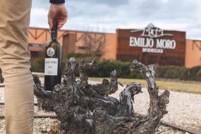 Thumbnail Wine Experience: Assapora La Ribera