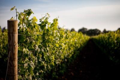 Thumbnail Wine tour e degustazione presso Tenuta di Vaira
