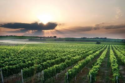 Thumbnail Borgo di Colloredo Wine Tasting