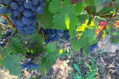 Thumbnail Hike and Wine experience in Roero at Malabaila