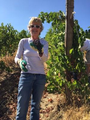 Thumbnail Morellino di Scansano wine tasting experience at Erik Banti