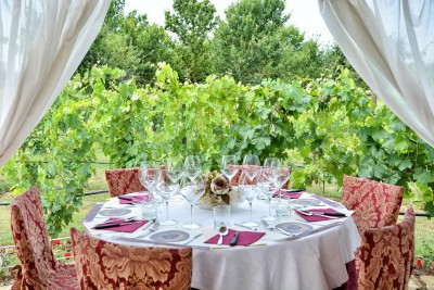 Thumbnail Wine tour, tasting and lunch at Tenuta Torciano