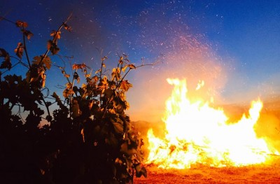Thumbnail Wine tasting experience at Casa di Baal