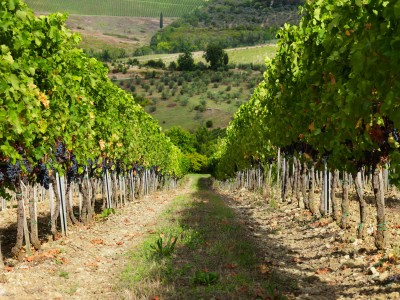 Thumbnail The vineyard in a glass: incredible experience at Ruffino Winery