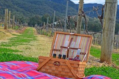 Thumbnail Picnic among the vines at Audrey Wilkinson