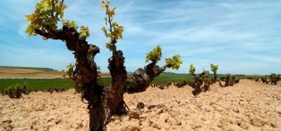 Thumbnail Ribera del Douero wine day tour from Madrid