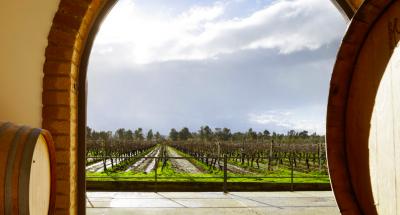 Thumbnail Exclusive wine tasting experience at Villa Matilde