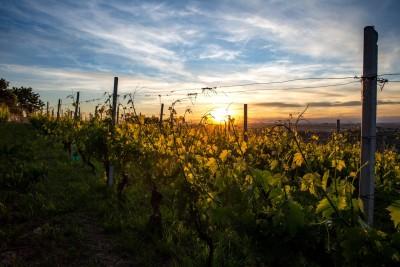 Thumbnail Wine tasting experience at Gianni Doglia