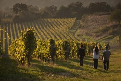 Thumbnail Wine tour and tasting at Feudi San Gregorio