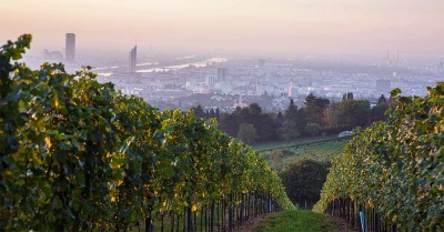 Thumbnail Wien wine tour experience with a local expert