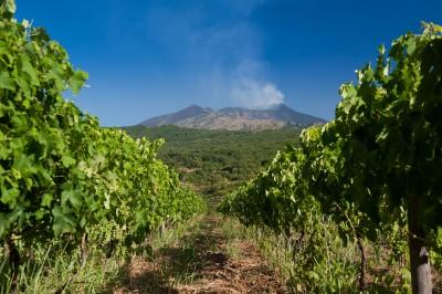 Thumbnail Taste the real Sicily by visiting Tenuta Montegorna